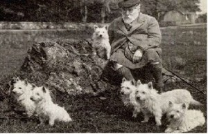 white-terrier_NG1